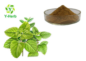 100% Pure Natural Melissa Officinalis Leaf Powder Lemon Balm Extract
