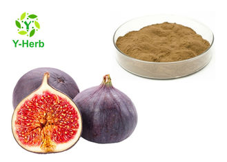 Leaf Or Dried Fig Fruit Extract Powder  High Purity Brown Fine Natural Supplement